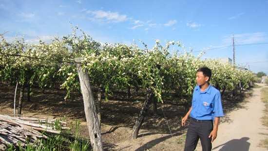 Khoan giếng, xây ao, lập giàn trồng táo