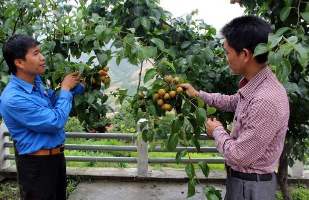 TIEN LAM  - Hỗ trợ khởi nghiệp là nhiệm vụ trọng tâm của Đoàn trong 5 năm tới