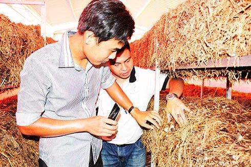 Duy Chiến (phía trước) kiểm tra nấm tại trang trại CT farm.