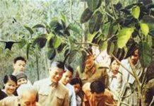 Chủ tịch Hồ Chí Minh tham gia tết trông cây tại ba vì hà tây