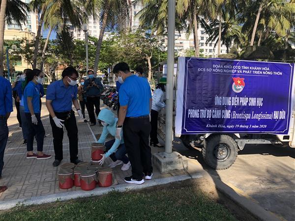 """""""Ứng dụng biện pháp sinh học phòng trừ bọ cánh cứng hại dừa"""" thả 10.000 cá thể bọ đuôi kim lên cây dừa tại bờ biển Nha Trang"""